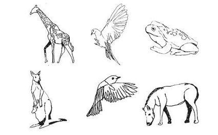 Illustrator: vettori di animali gratis