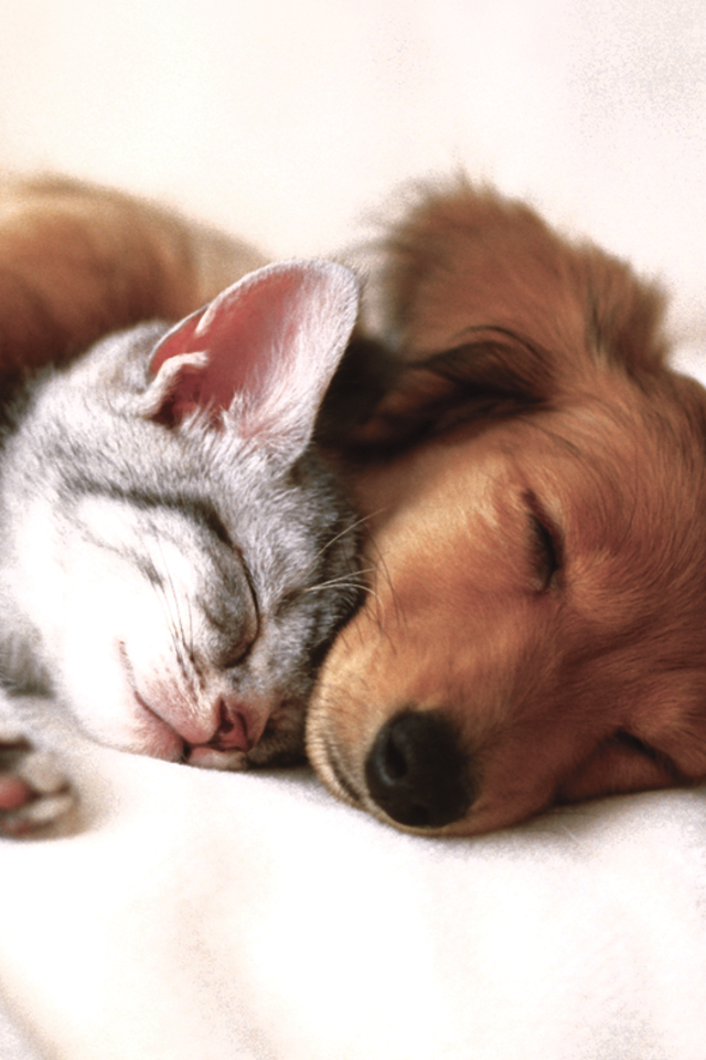 Cat and Dog 3Wallpapers Cat and Dog