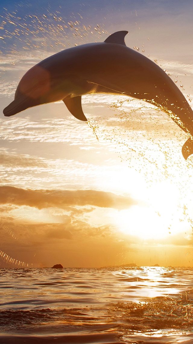 Sunset Dolphin 3Wallpapers iPhone 5 Sunset Dolphin