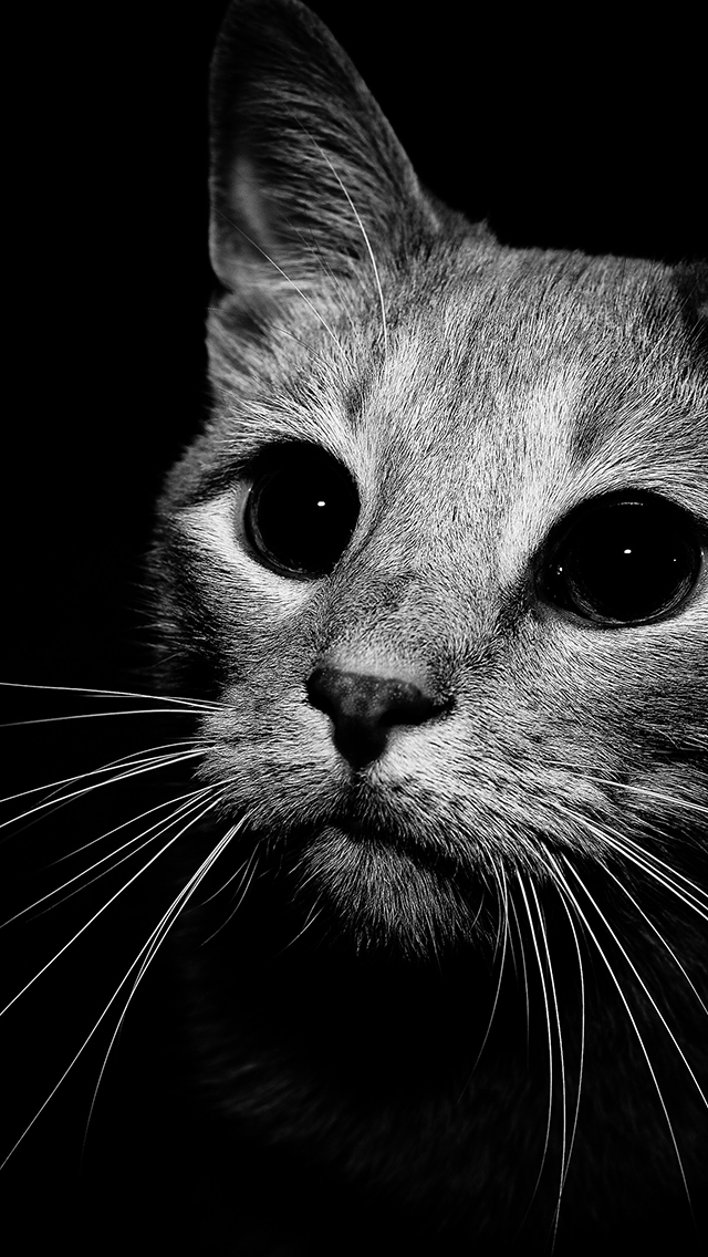 Cat in Black and White 3Wallpapers iPhone 5 Cat in Black and White