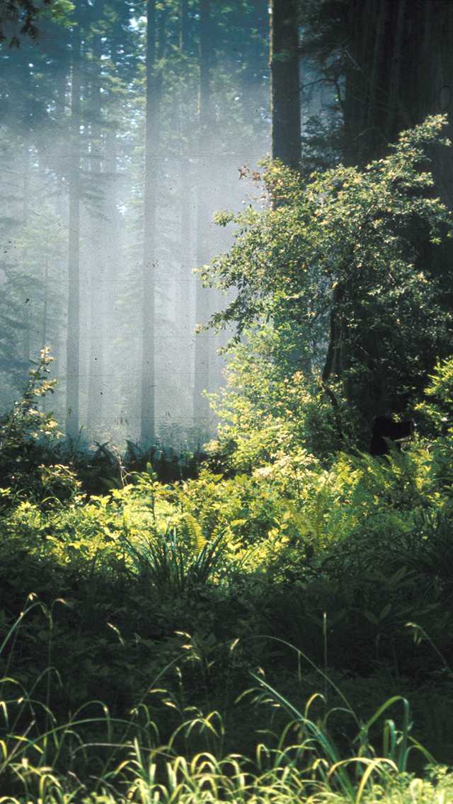 Forest 3Wallpapers iPhone Forest