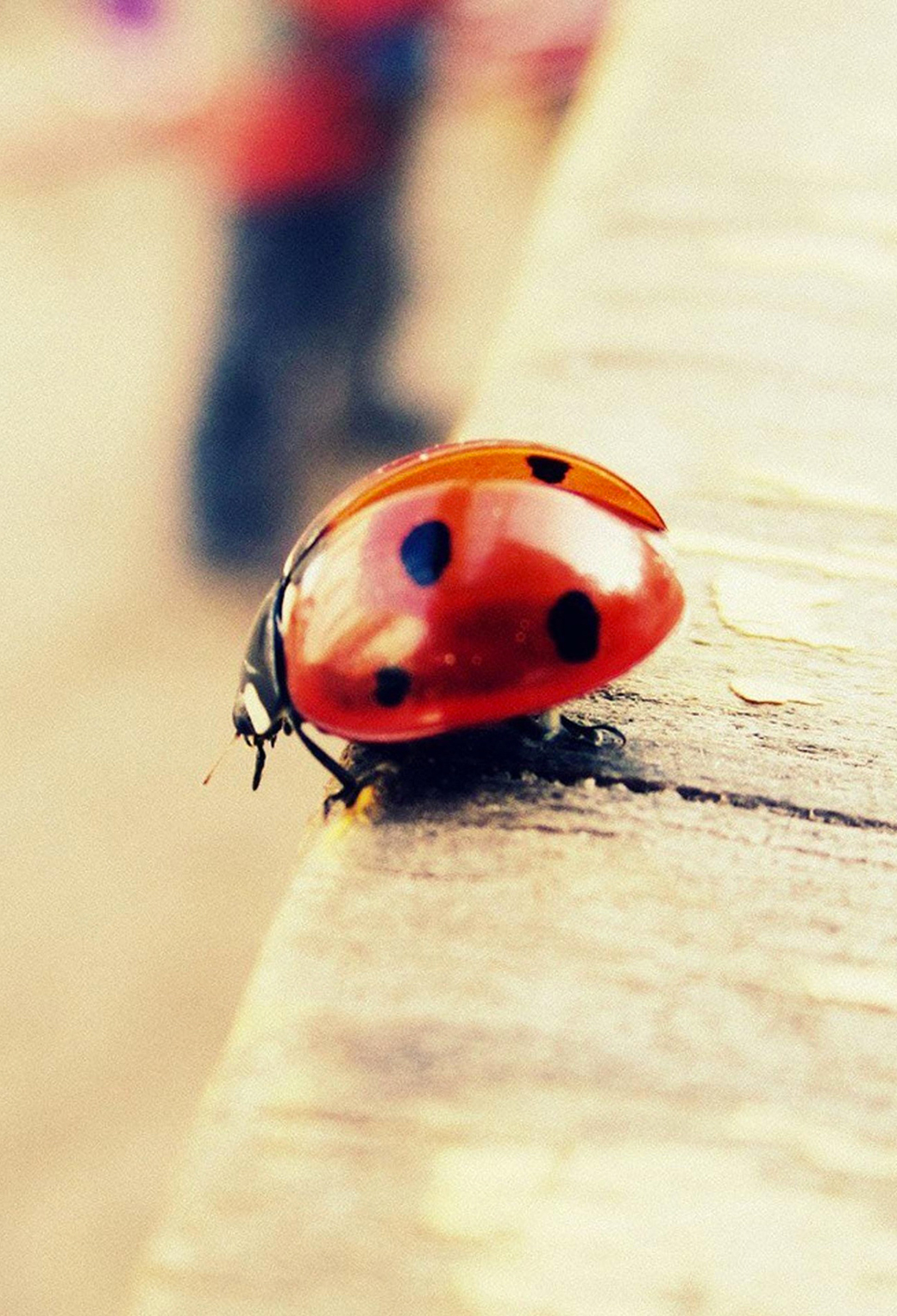 Coccinelle 3Wallpapers iPhone Parallax Coccinelle