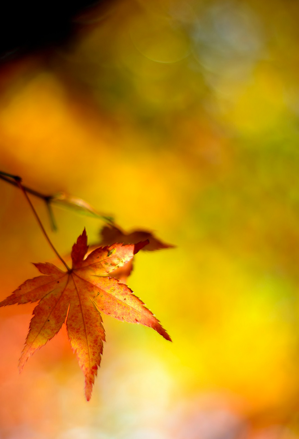 Automn 3Wallpapers iPhone Parallax Automn