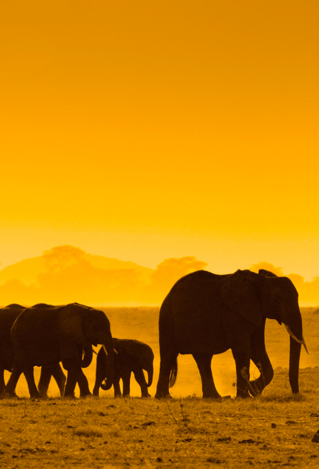 Elephants at Sunset 3Wallpapers iPhone Parallax Elephants at Sunset