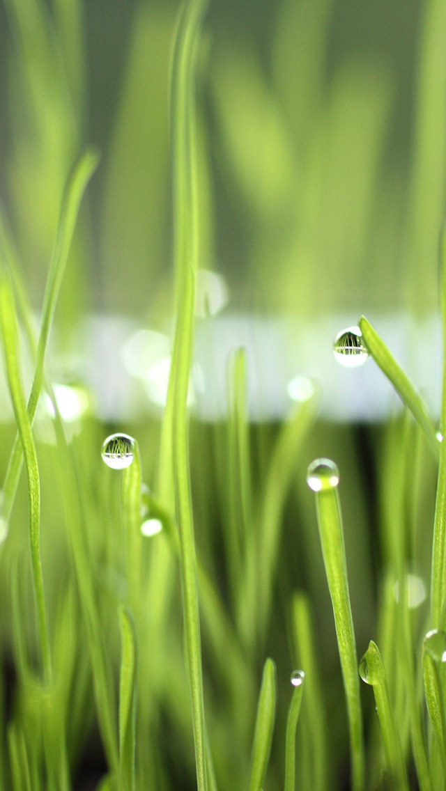 Droplets of Water on Grass 3Wallpapers iphone Parallax Droplets of Water on Grass