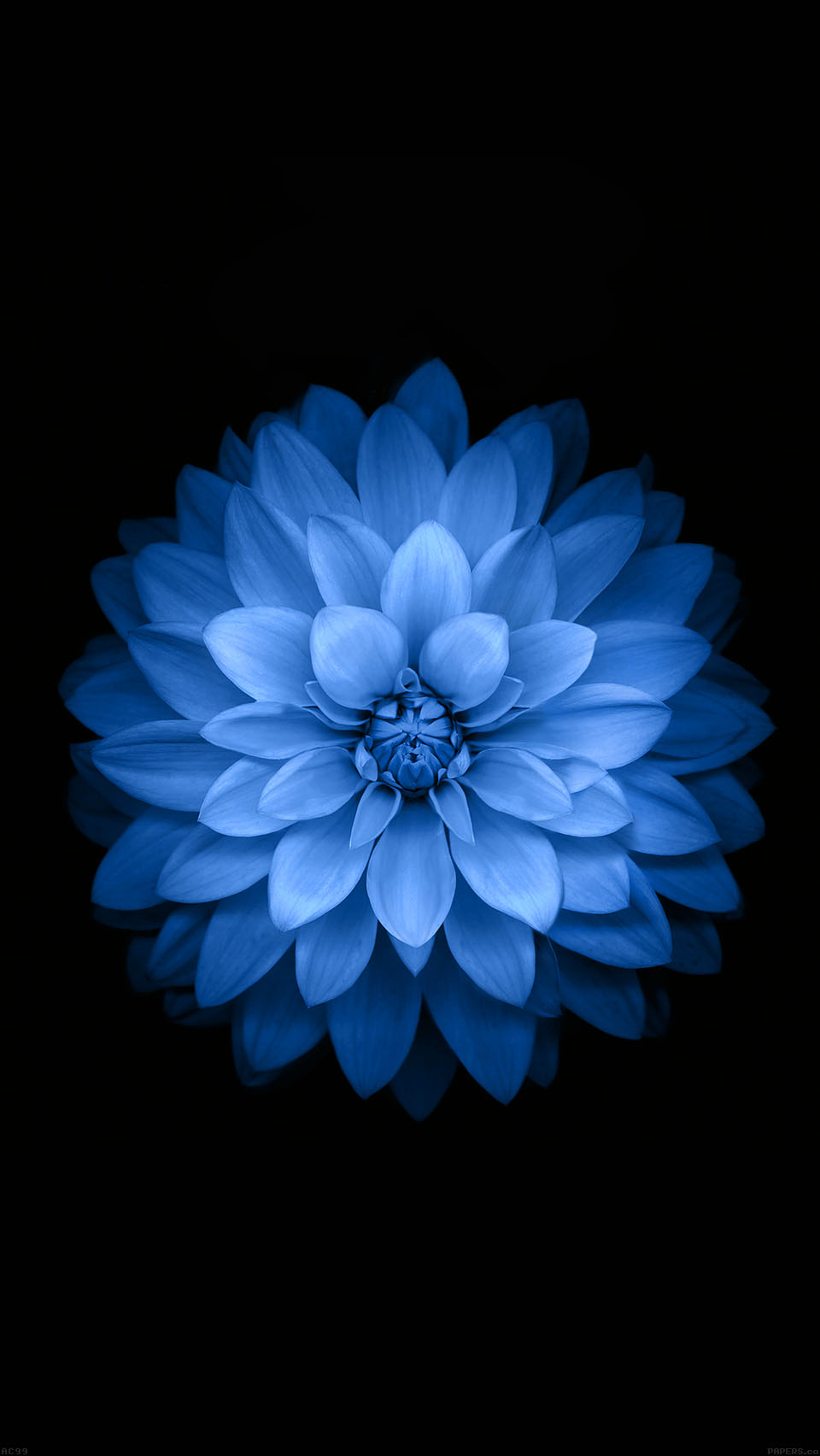 Blue Lotues iOS 8 Wallpaper Variant iPhone 6 Blue Lotues