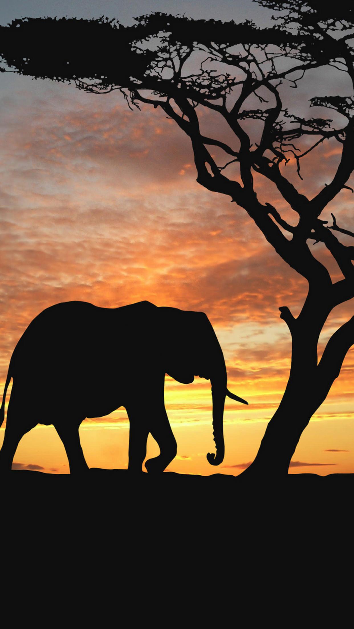 Elephant 3Wallpapers iPhone Parallax Elephant