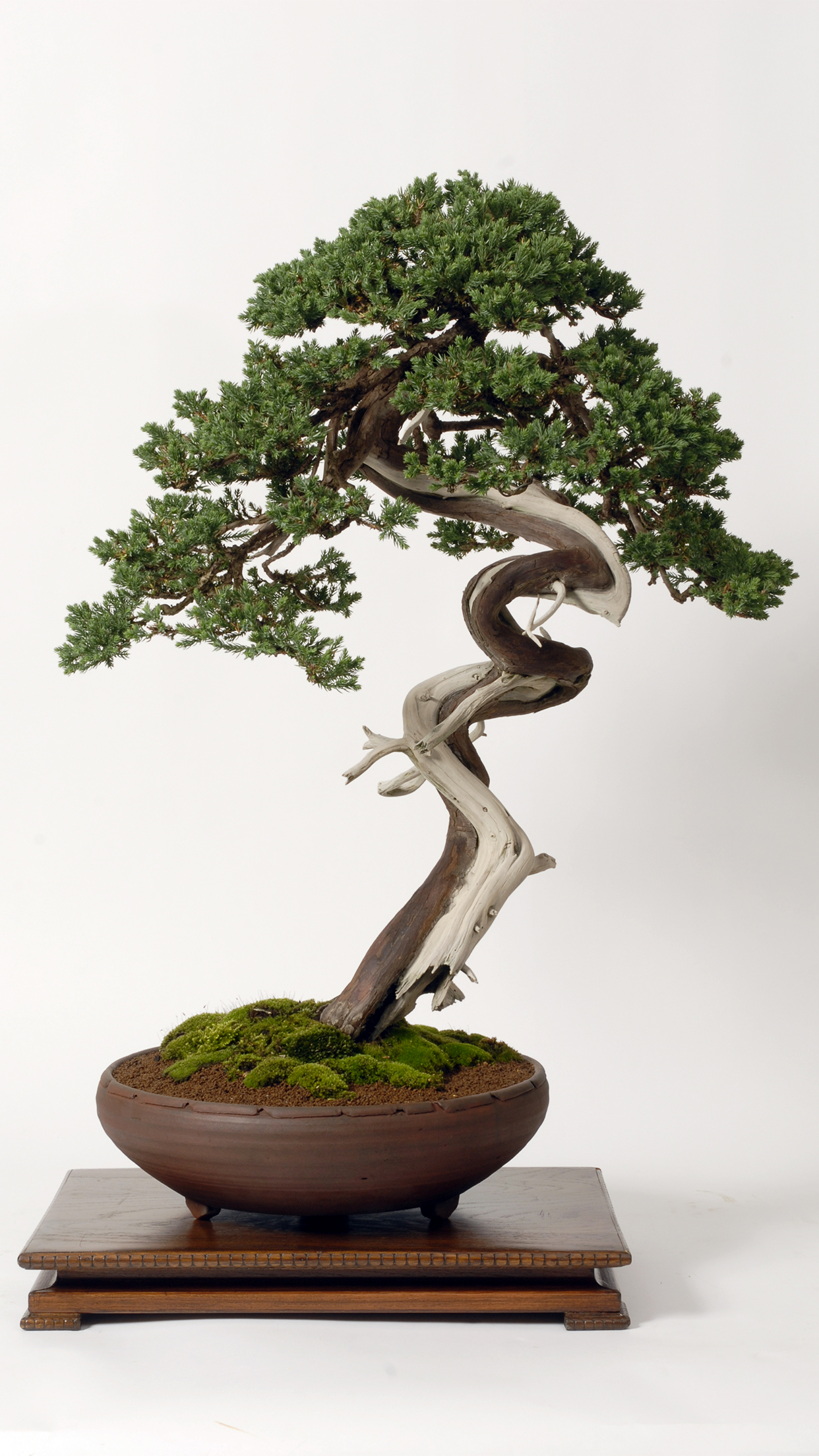 Bonsai Wallpaper : bonsai, wallpaper, Bonsai, Wallpaper, IPhone, Download, 3Wallpapers