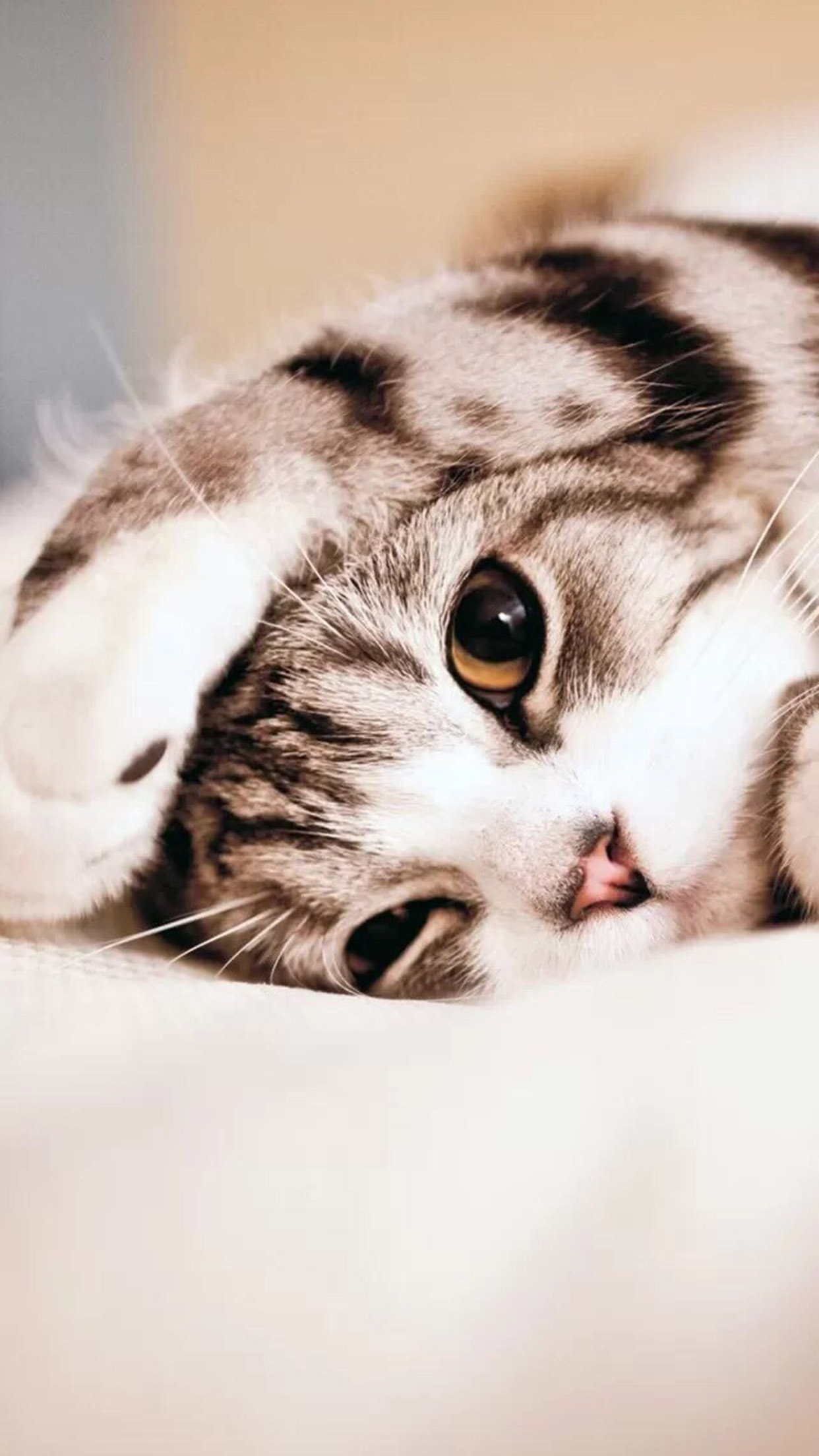 Chat Chat 2 3Wallpapers iPhone Parallax Cat 2