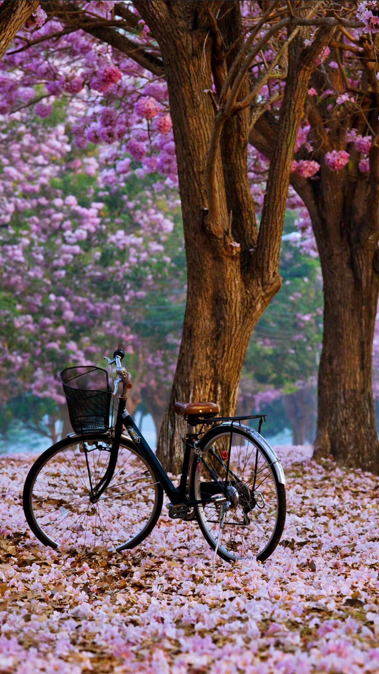 Spring Bike 3Wallpapers iPhone Parallax Spring : Bike