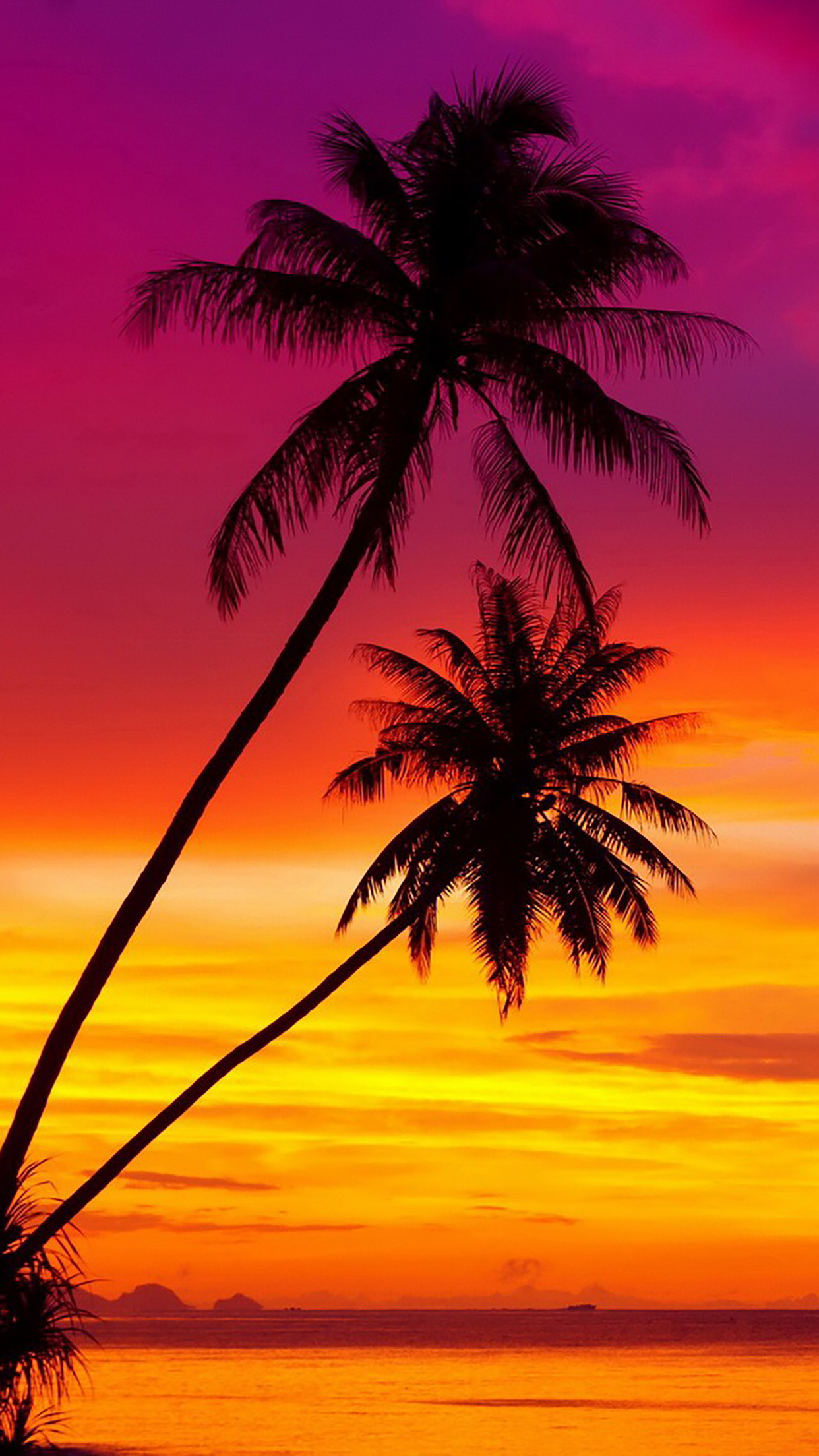 Coconut Palm 3 3Wallpapers iPhone Parallax Coconut Palm : 3