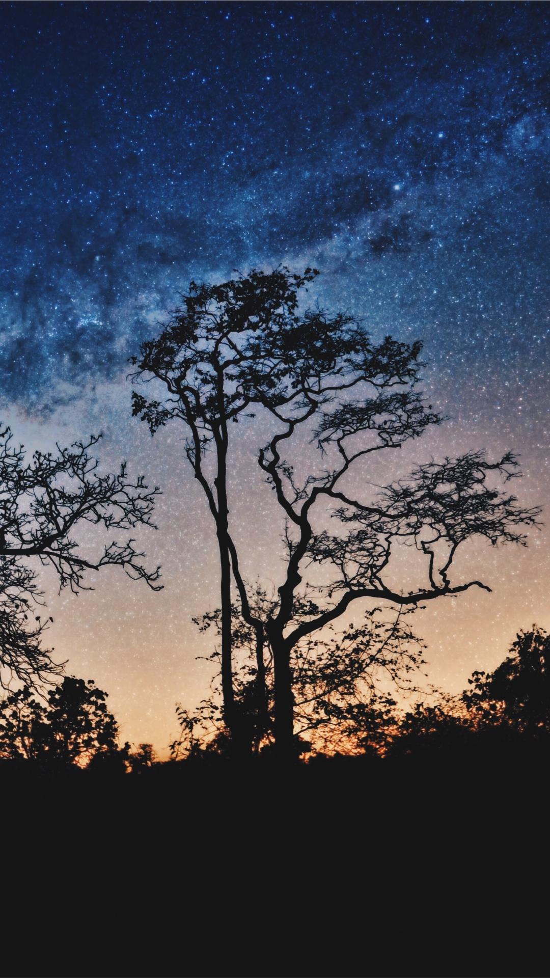 iphone wallpaper trees night stars sky Trees