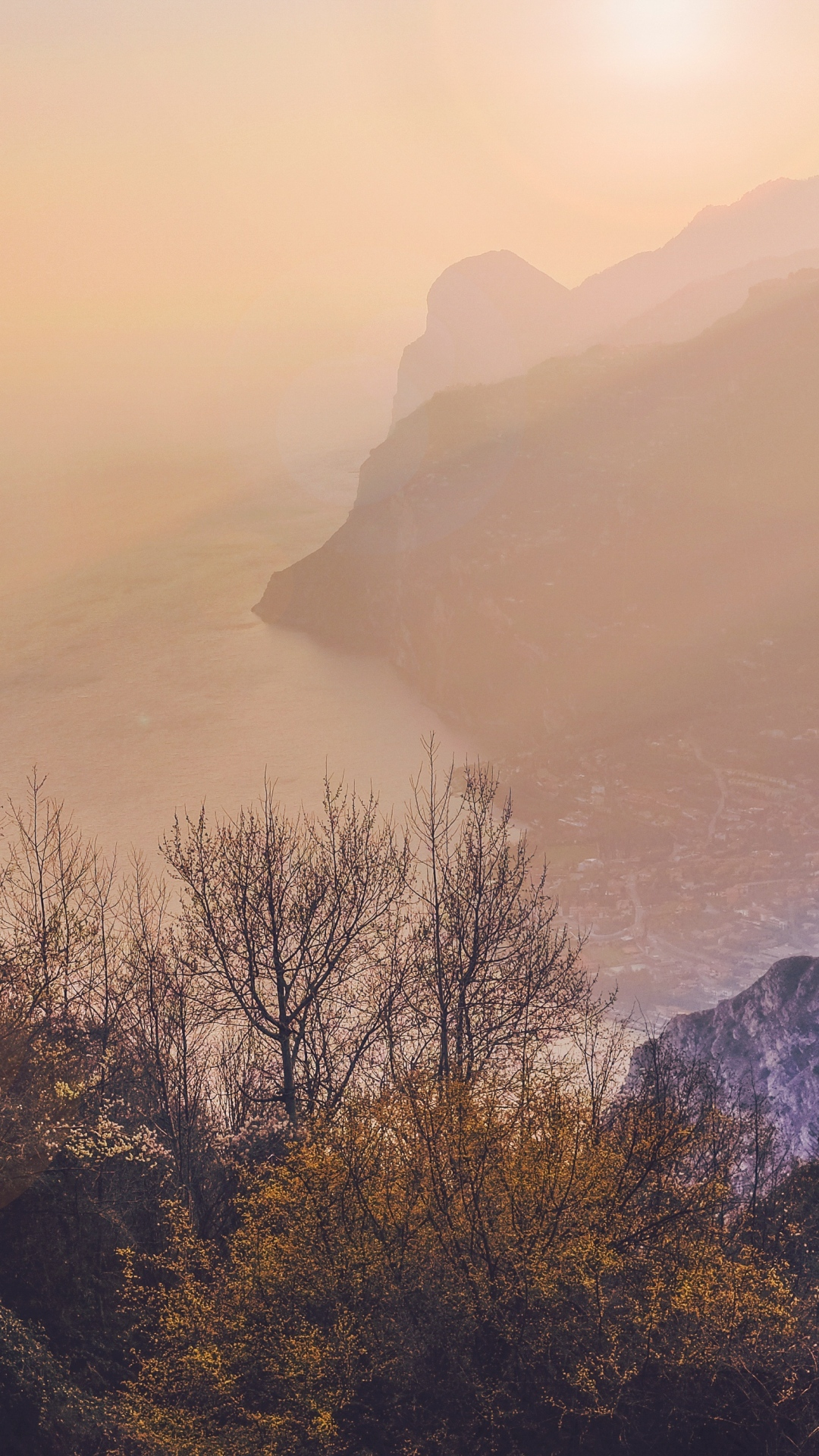 iphone wallpaper trees sea mountains fog Trees