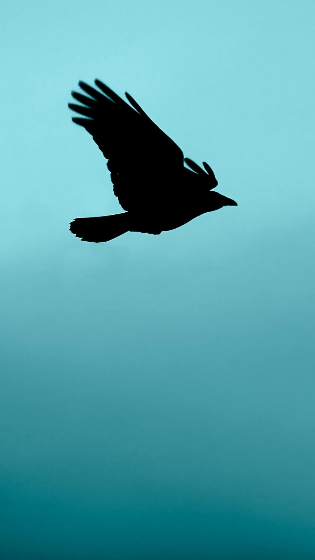 bird flight silhouette Bird