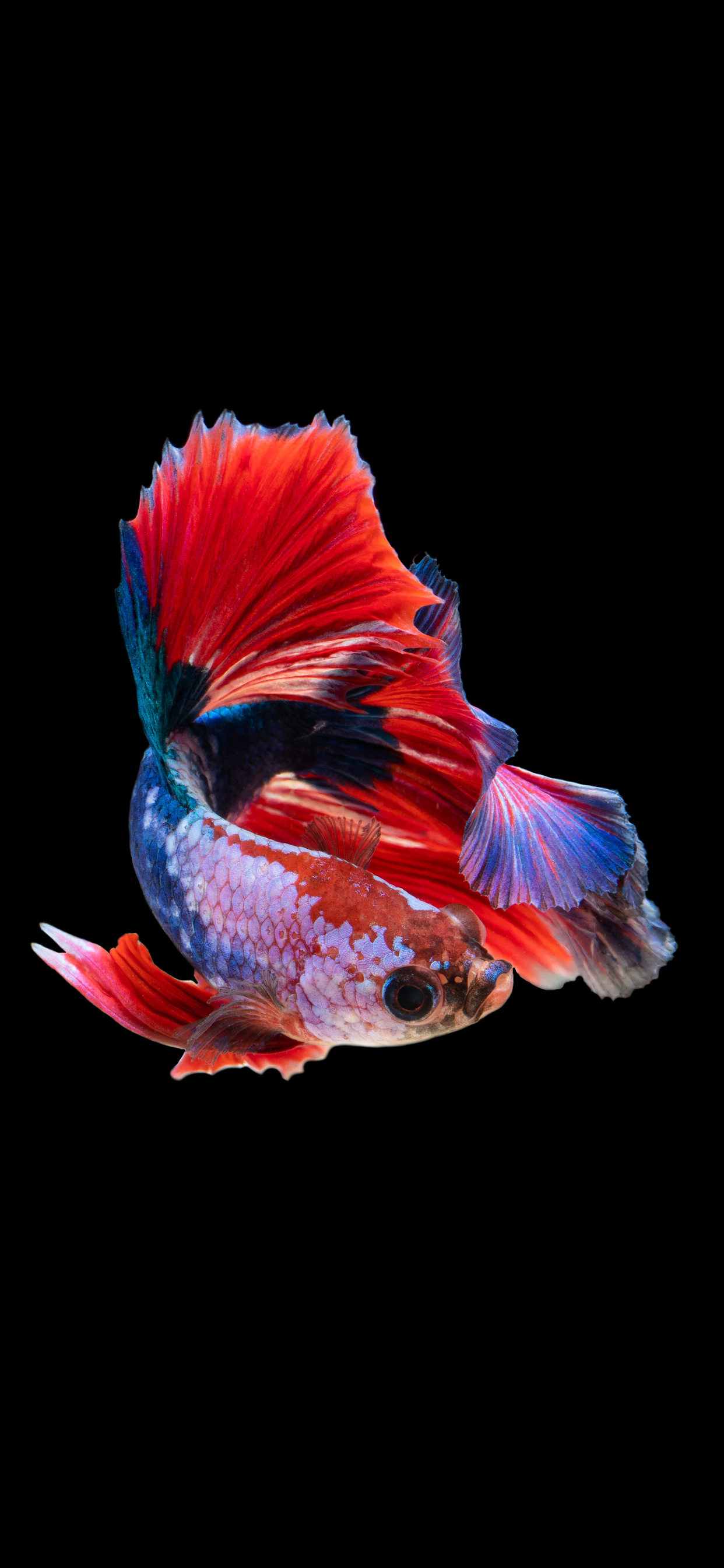 iPhone wallpapers fish colors Fish