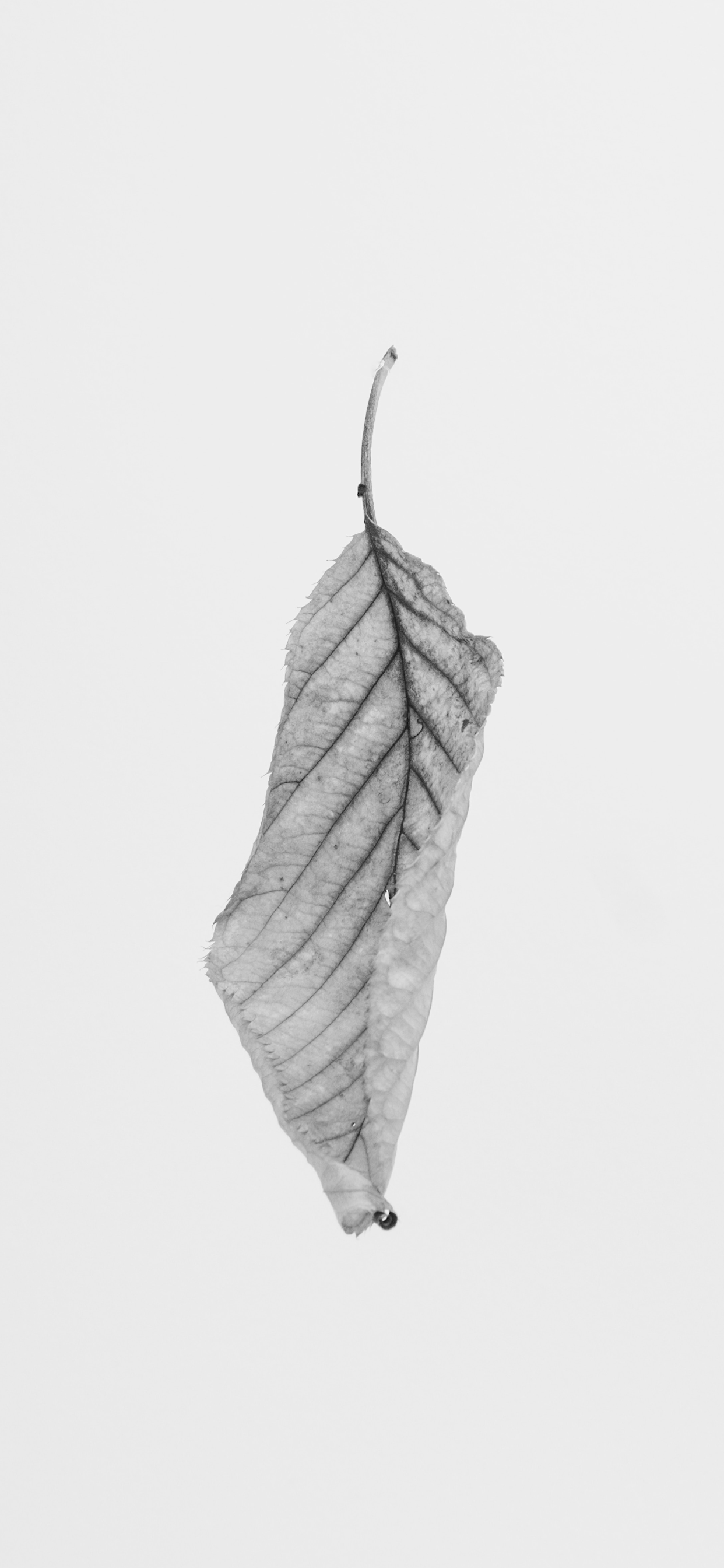 iPhone wallpapers minimal black white leaf Black and White