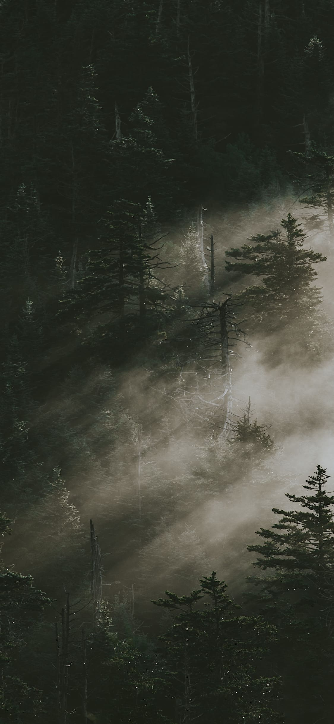 iPhone wallpapers forest fog green Forest