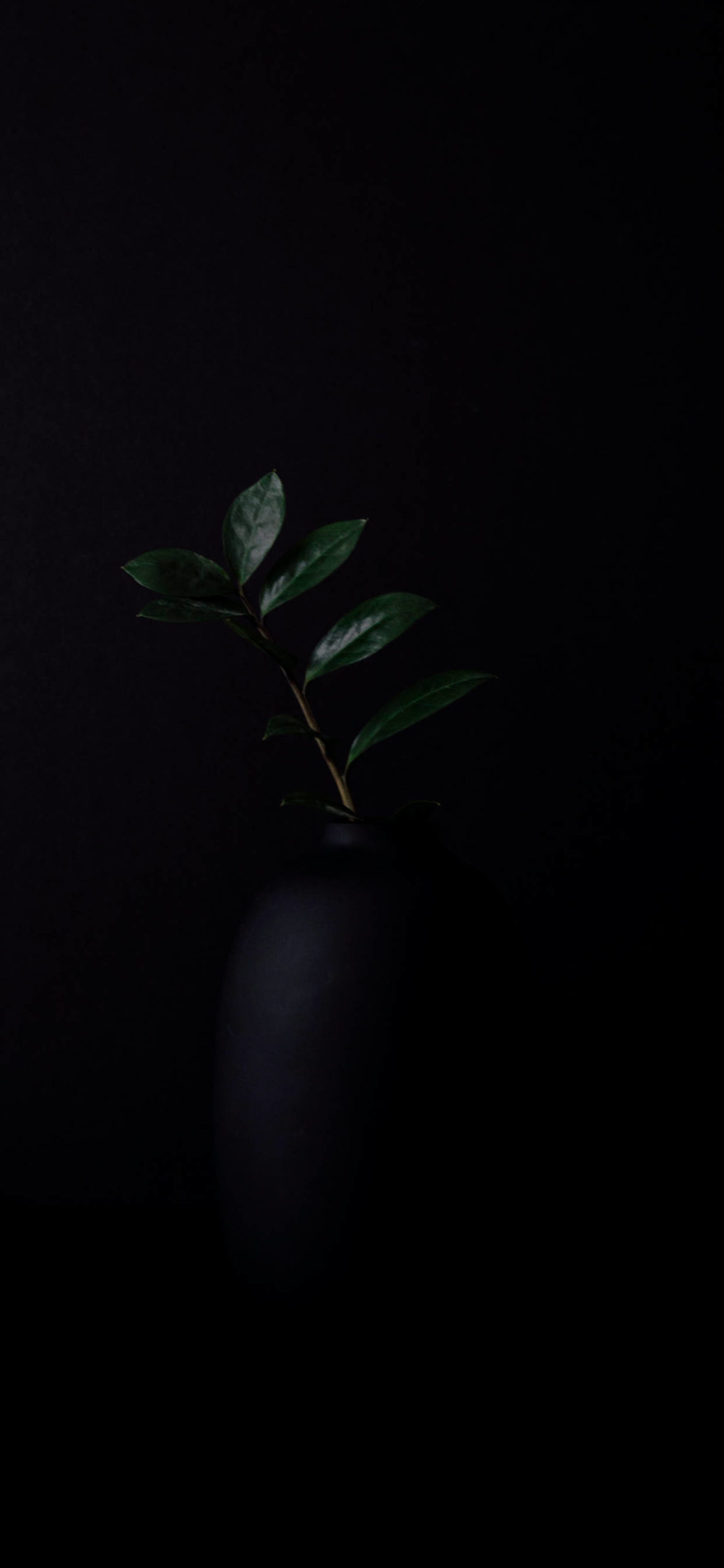 iPhone wallpapers black plant scaled Black