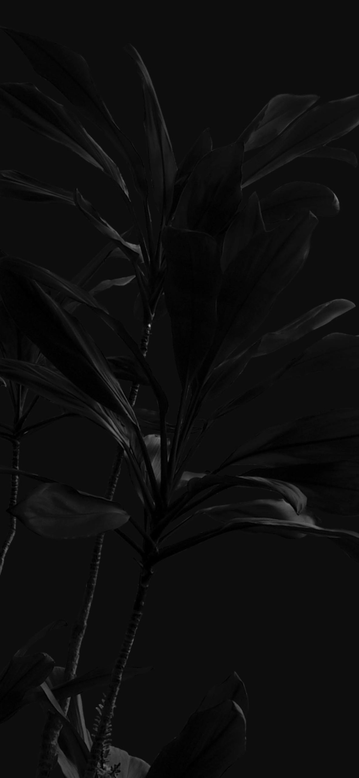 iPhone wallpapers black plants scaled Black