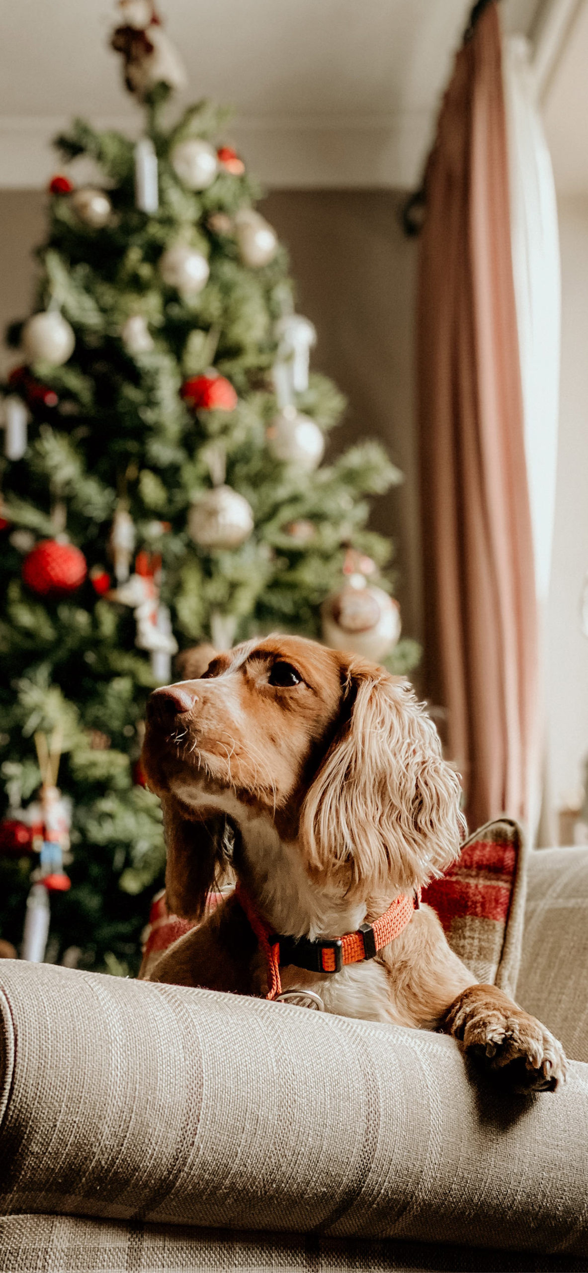 iphone Wallpapers christmas dog tree scaled Christmas Dog