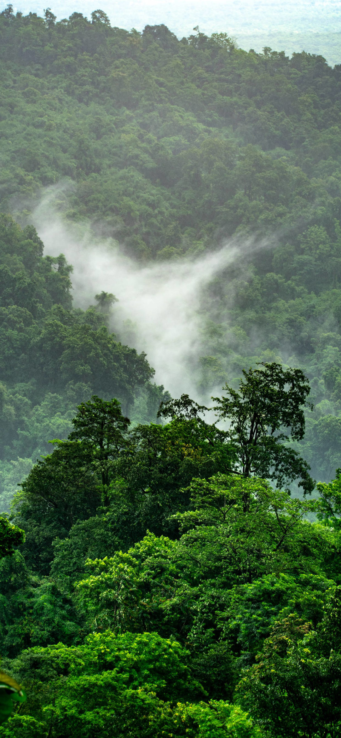 iPhone wallpapers jungle green fog scaled Jungle