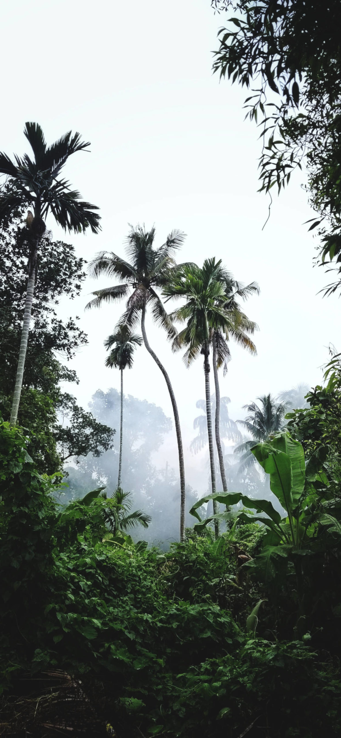 iPhone wallpapers jungle palms trees scaled Jungle