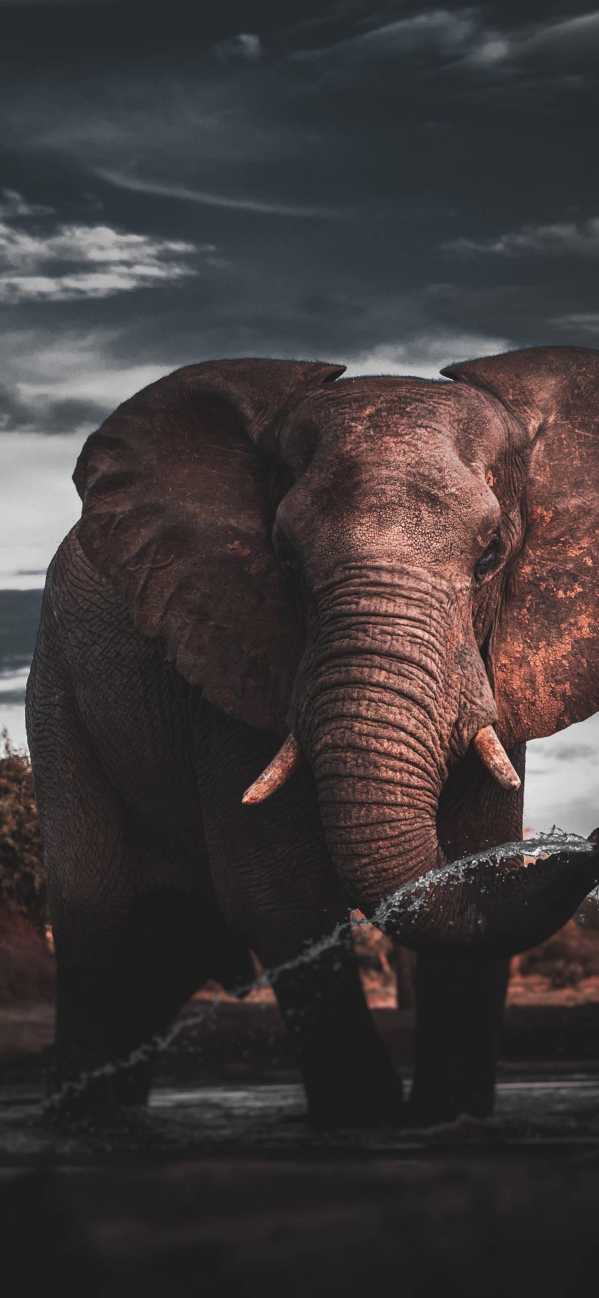iPhone wallpapers elephanth botswana Elephant