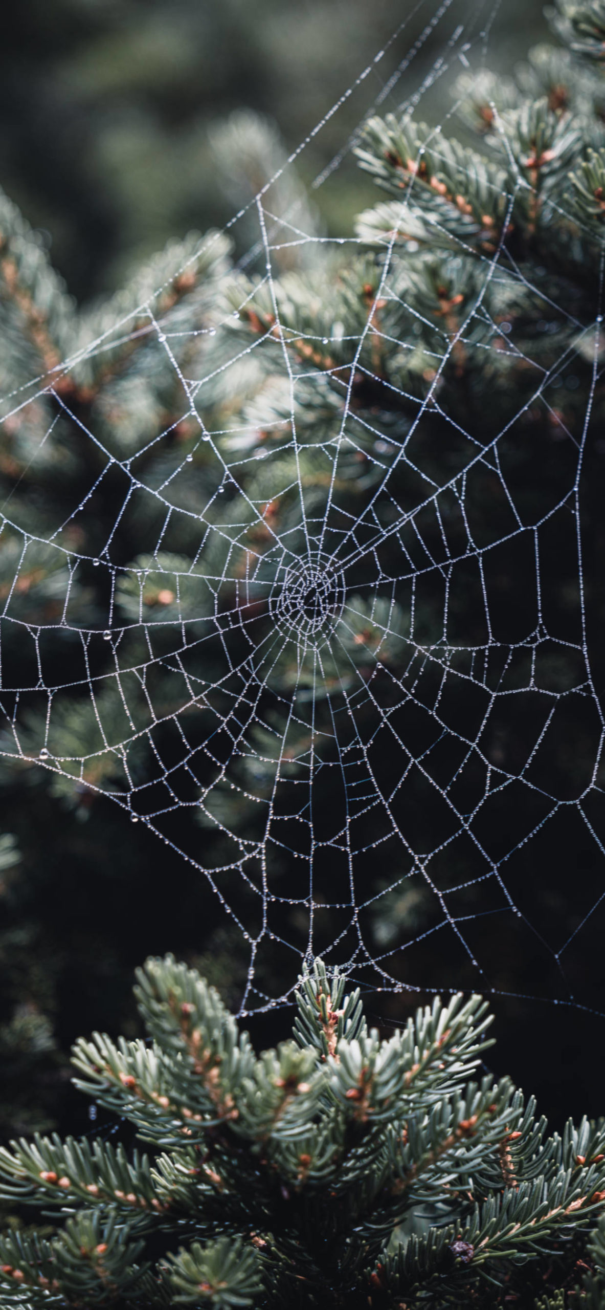 iPhone wallpapers spiderweb water drops scaled Spider web