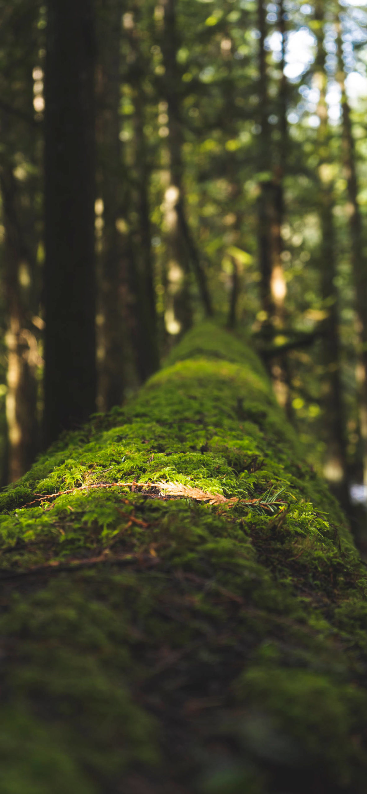 iPhone wallpapers moss tree forest scaled Moss