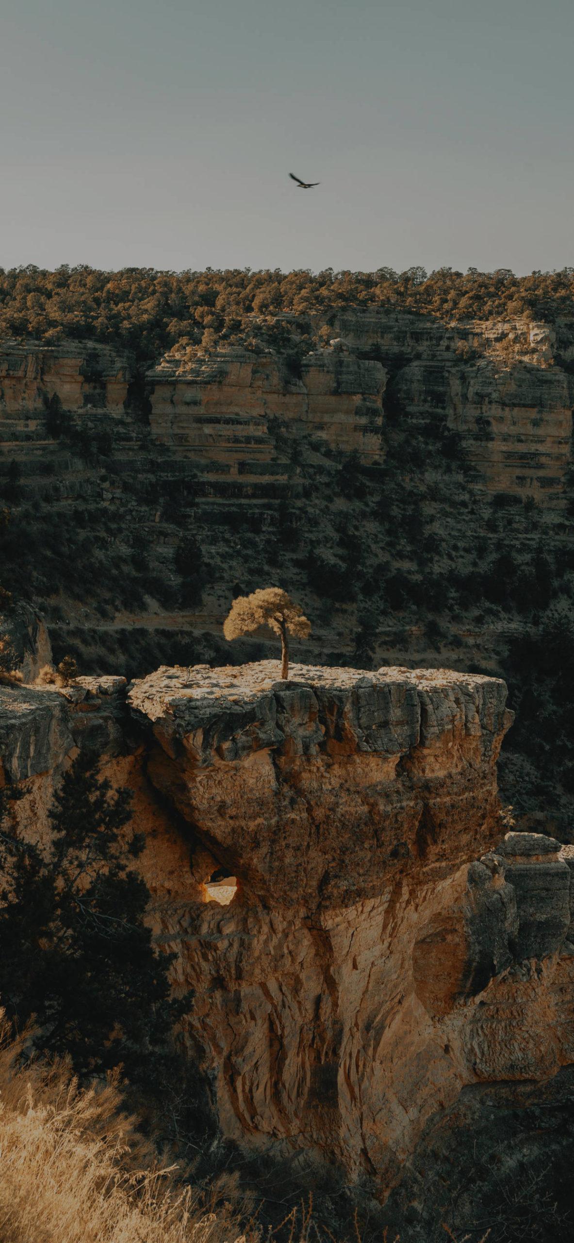 iPhone wallpapers arizona scaled Arizona