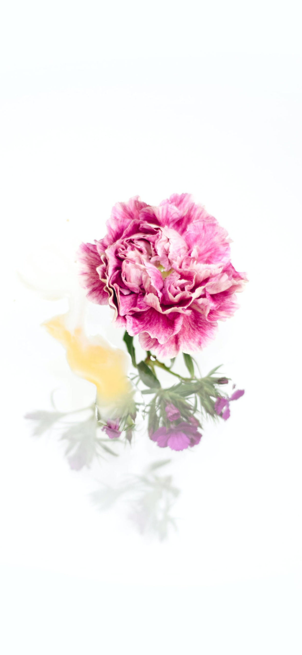 iPhone wallpapers flowers pink purple scaled Flowers