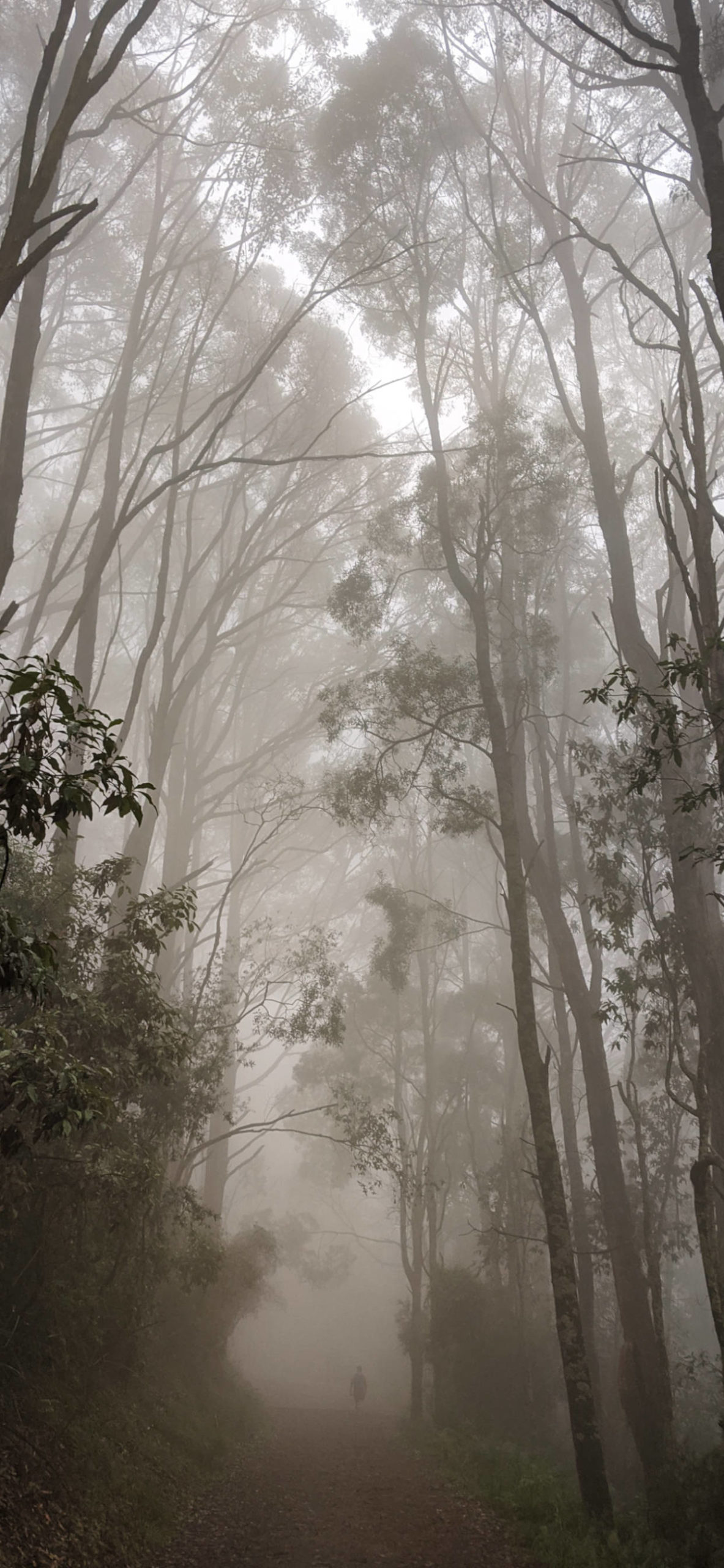 iPhone wallpapers forest fog scaled Fog