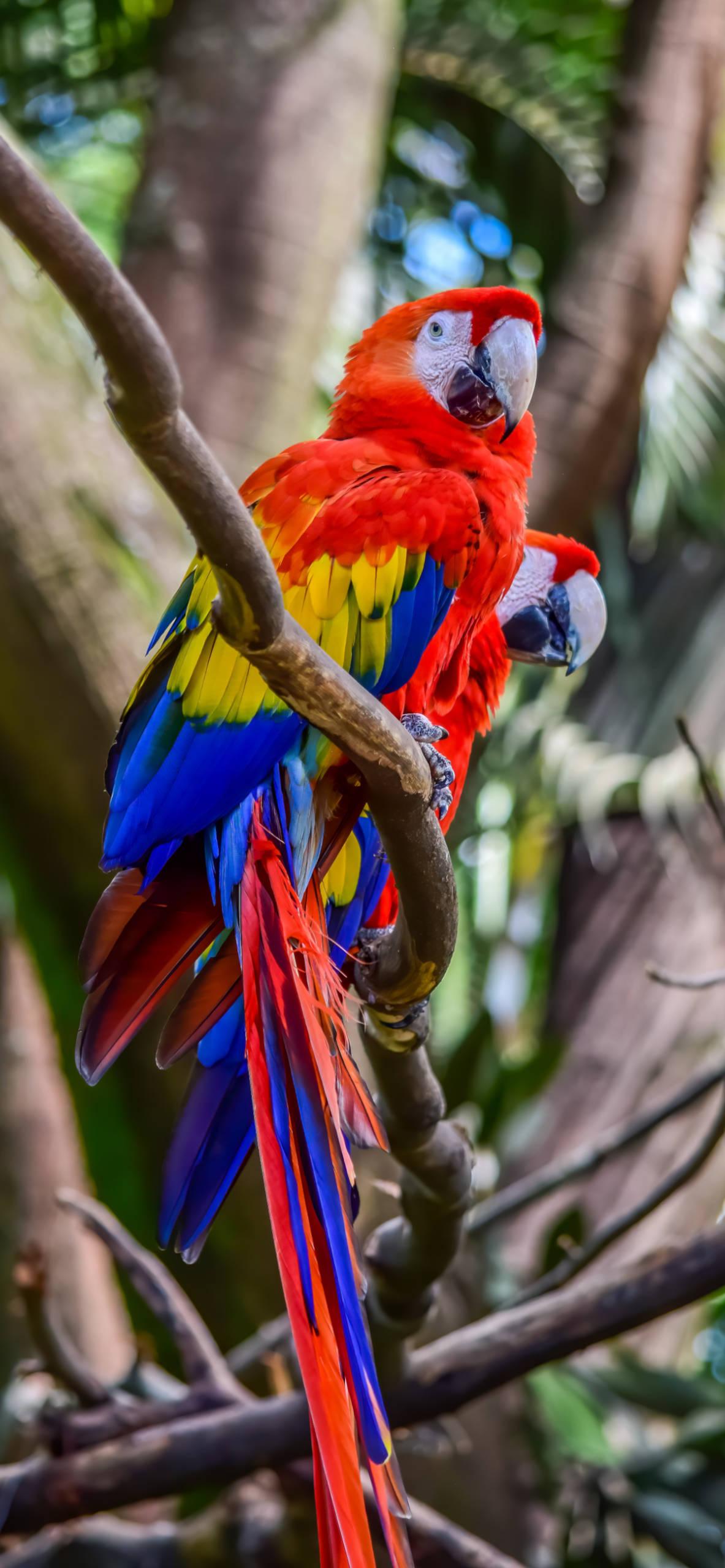 iPhone wallpapers macaw santa fe zoo Macaw