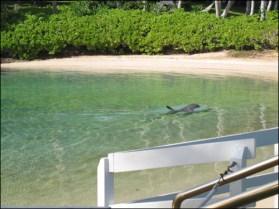 Hawaii Trip 2003 (37)