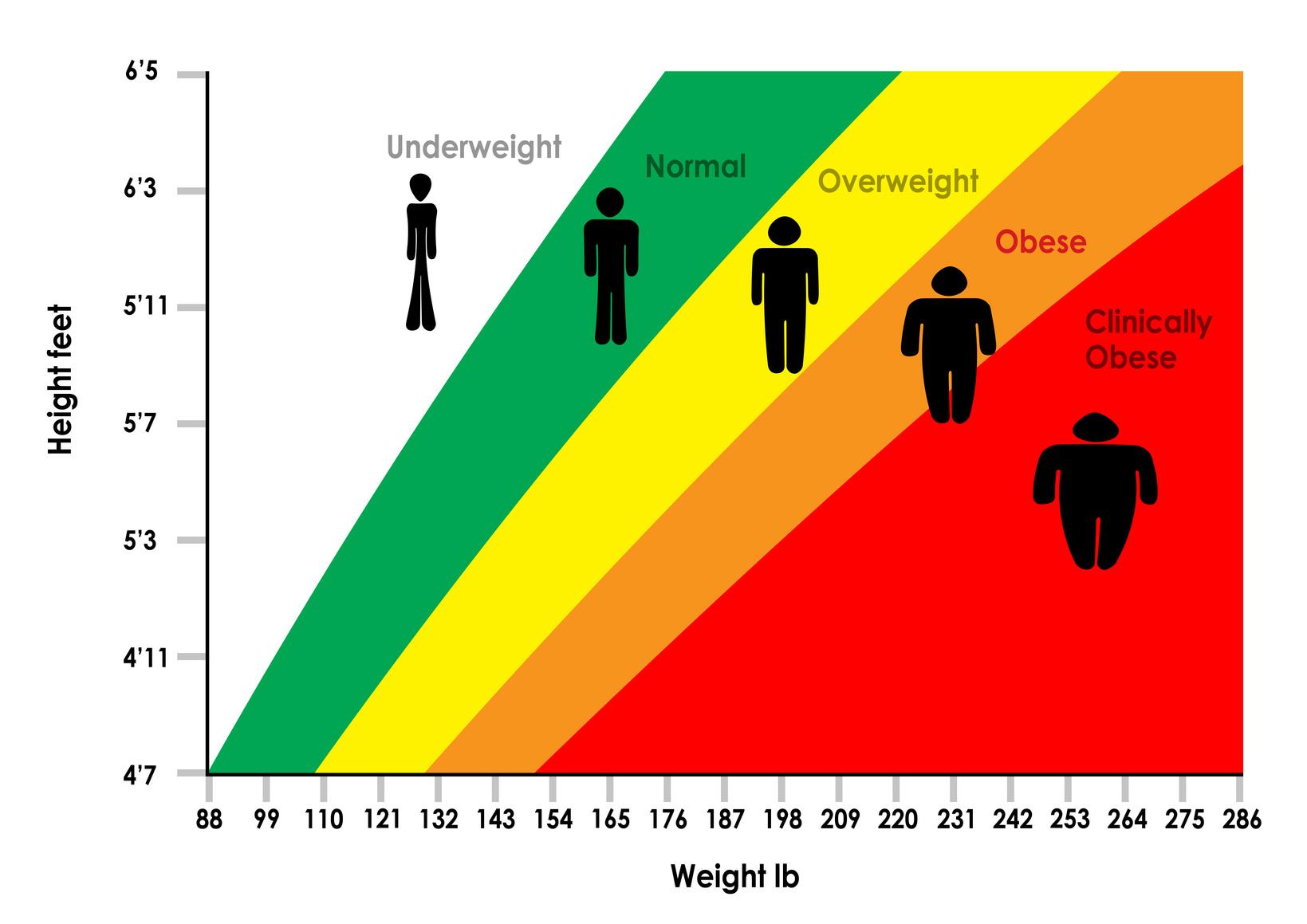 The Link Between Bmi Amp Longevity