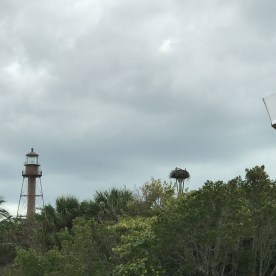 View of lighthouse and osprey nests