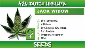 420 Dutch Highlife Jack Widow