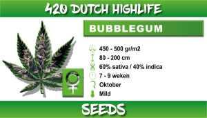 bubbelgum
