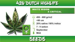 white widow critical