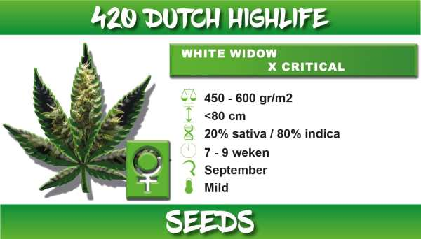 white widow critical