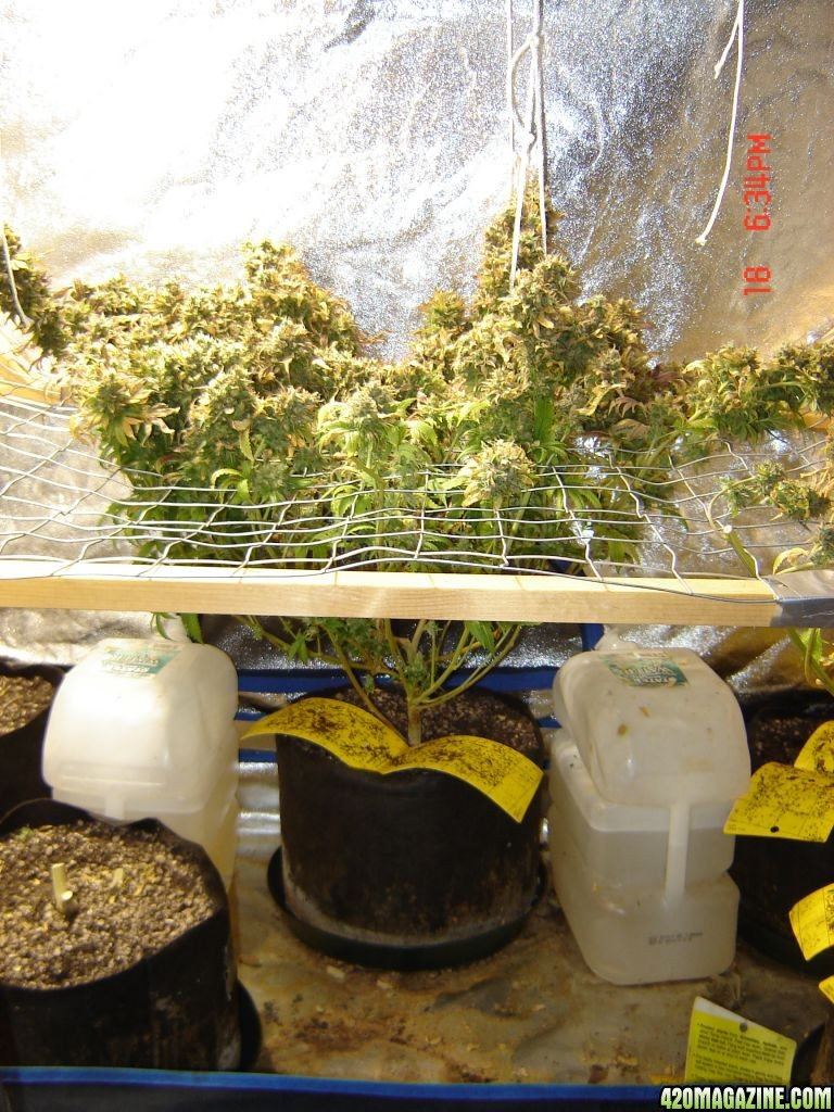 Led Light Plant Pots
