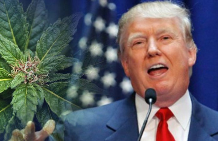 Image result for Trump Says He Is Likely To Support Ending The Federal Ban On Cannabis