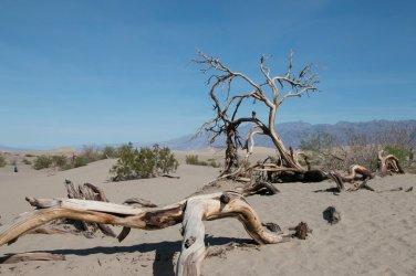 DV Views Sand Dunes_0003