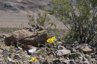 DV Views flowers Valley_0016