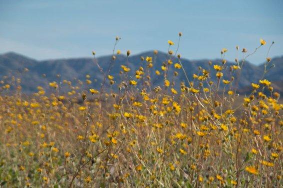 DV Views spring Flowers_0030