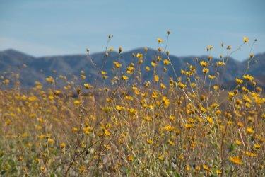 DV-Views-spring-Flowers_0030