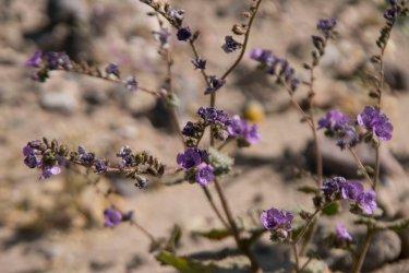DV Views spring Flowers_0107 copy