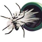 spidercatcher