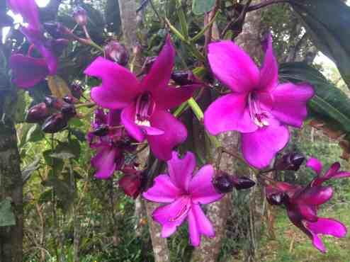 Flowers in Arvi Park