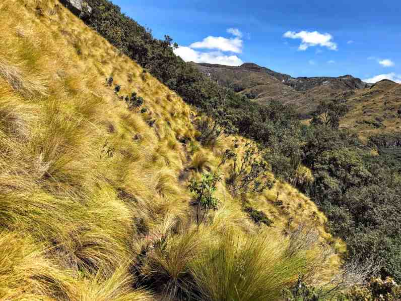 Trail in Cajas National Park things to do in Ecuador